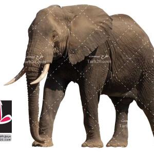 عکس با کیفیت دوربری شده png فیل