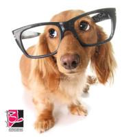 تصویر استوک و با کیفیت سگ با عینک