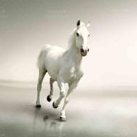 تصویر با کیفیت زیباترین اسب دنیا