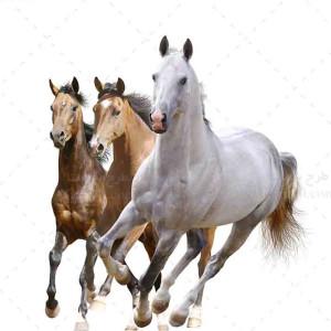 تصویر با کیفیت اسب های سفید و قهوه ای