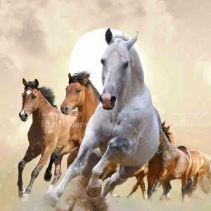 تصویر با کیفیت دسته اسب های سفید و قهوه ای