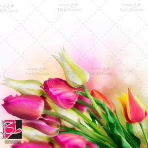 عکس استوک و با کیفیت گلهای رنگی