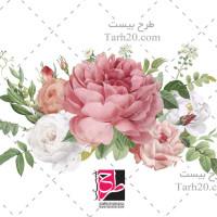 دانلود فایل وکتور گلهای رز نقاشی شده