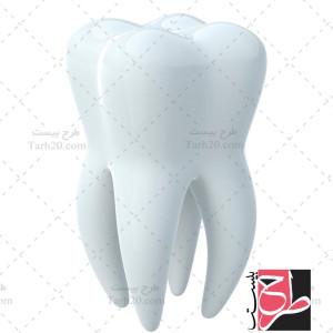 تصویر با کیفیت دندان کامل با ریشه