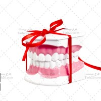 تصویر استوک مدل نمایشی چیدمان دندانها