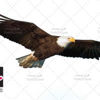 عکس با کیفیت پرنده عقاب در حال پرواز