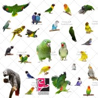 مجموعه عکس با کیفیت انواع پرنده طوطی
