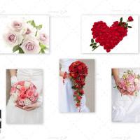 مجموعه تصاویر استوک با کیفیت گل