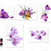 مجموعه تصاویر با کیفیت گل زعفران