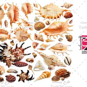 مجموعه تصاویر باکیفیت صدف و گوش ماهی