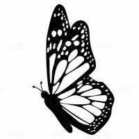 طرح وکتور پروانه سیاه و سفید