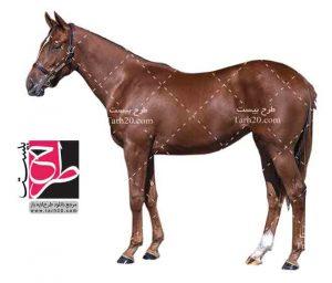 فایل PNG اسب