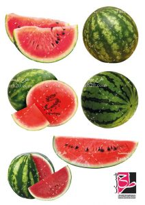 مجموعه تصاویر هندوانه