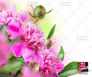 تصویر با کیفیت گل