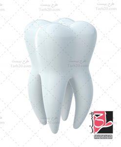 تصویر دندان و ریشه